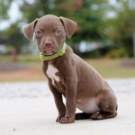 Adoptable (Official) Georgia Dogs for October 13, 2016