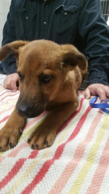 Forsyth County Humane Society Dogs For Adoption
