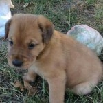 Adoptable (Official) Georgia Dogs for October 24, 2016