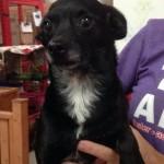 Adoptable (Official) Georgia Dogs for November 4, 2016