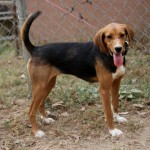 Adoptable (Official) Georgia Dogs for November 16, 2016