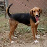 Adoptable (Official) Georgia Dogs for November 16, 2016