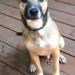 Adoptable (Official) Georgia Dogs for November 7, 2016
