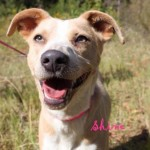 Adoptable (Official) Georgia Dogs for November 3, 2016