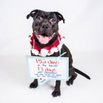 Adoptable (Official) Georgia Dogs for December 13, 2016