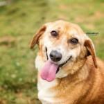 Adoptable (Official) Georgia Dogs for December 6, 2016