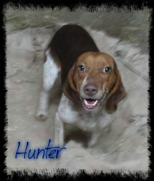 huntermurray