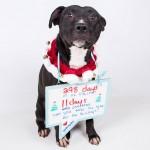 Adoptable (Official) Georgia Dogs for December 16, 2016