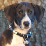 Adoptable (Official) Georgia Dogs for December 9, 2016