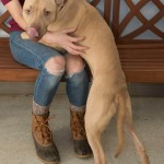 Adoptable (Official) Georgia Dogs for January 31, 2017