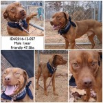 Adoptable (Official) Georgia Dogs for January 6, 2017