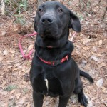 Adoptable (Official) Georgia Dogs for February 22, 2017