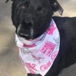 Adoptable (Official) Georgia Dogs for February 17, 2017
