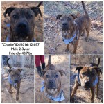 Adoptable (Official) Georgia Dogs for February 8, 2017