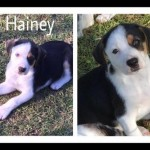 Adoptable (Official) Georgia Dogs for February 16, 2017