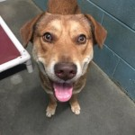 Adoptable (Official) Georgia Dogs for February 2, 2017