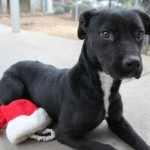 Official (Adoptable) Georgia Dogs for February 28, 2017