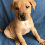 Adoptable (Official) Georgia Dogs for February 10, 2017