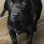 Adoptable (Official) Georgia Dogs for March 27, 2017