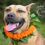 Adoptable (Official) Georgia Dogs for March 9, 2017