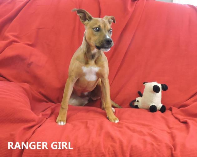 Ranger Girl