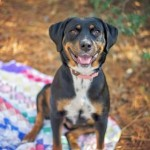 Adoptable (Official) Georgia Dogs for March 21, 2017