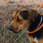 Adoptable (Official) Georgia Dogs for April 11, 2017