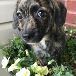 Adoptable (Official) Georgia Dogs for April 18, 2017