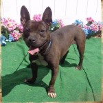 Adoptable (Official) Georgia Dogs for April 13, 2017