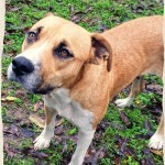 Adoptable (Official) Georgia Dogs for May 18, 2017