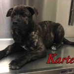 Adoptable (Official) Georgia Dogs for May 10, 2017