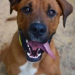 Adoptable (Official) Georgia Dogs for May 16, 2017