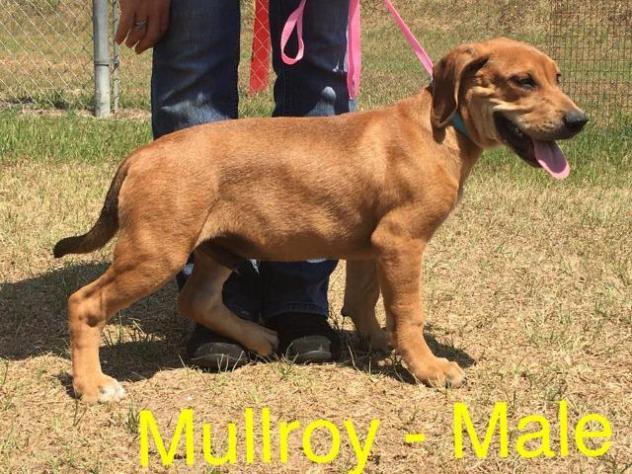 Mullroy