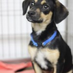 Adoptable (Official) Georgia Dogs for May 8, 2017