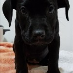 Adoptable (Official) Georgia Dogs for May 25, 2017