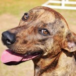 Adoptable (Official) Georgia Dogs for May 19, 2017