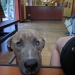 Adoptable (Official) Georgia Dogs for June 20, 2017