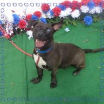 Adoptable (Official) Georgia Dogs for June 15, 2017