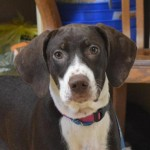Adoptable (Official) Georgia Dogs from June 27, 2017
