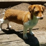 Adoptable (Official) Georgia Dogs for July 19, 2017