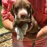 Adoptable (Official) Georgia Dogs for July 21, 2017