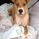 Adoptable (Official) Georgia Dogs for July 3, 2017