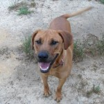Adoptable (Official) Georgia Dogs for July 14, 2017