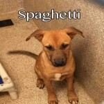 Adoptable (Official) Georgia Dogs for July 25, 2017