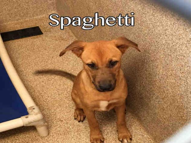 SpaghettiMBCAW