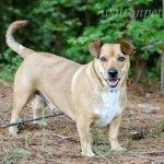 Adoptable (Official) Georgia Dogs for August 17, 2017