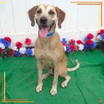 Adoptable (Official) Georgia Dogs for August 15, 2017