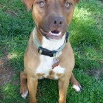 Adoptable (Official) Georgia Dogs for August 2, 2017