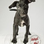 Adoptable (Official) Georgia Dogs for August 1, 2017