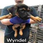 Adoptable (Official) Georgia Dogs for August 8, 2017